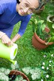 Aktive und glückliche ältere Frauengartenarbeit Stockbild