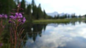 Aktiver Feiertag des schönen Sommers in den Dolomit stock video