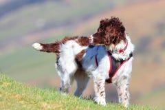 Aktiver gesunder Hund im Freien Stockbild