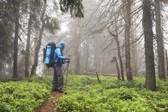 Aktiver gesunder Mann, der im schönen Wald wandert Lizenzfreies Stockfoto