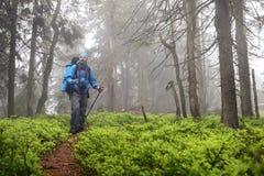 Aktiver gesunder Mann, der im schönen Wald wandert Stockbild
