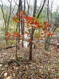 aktivera skogen Fotografering för Bildbyråer