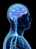 Aktives Gehirn lizenzfreie abbildung