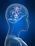 Aktives Gehirn Stockfoto