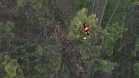 Aktives sportliches Rothaarigem?dchen klettern oben auf die Oberseite der Kiefers Luftschuss-Koniferenwald stock video