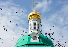 Aktivitet av en flock av fåglar på kupolen royaltyfri fotografi