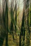 Aktivitet av ljus och vind i skogen royaltyfri fotografi