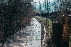 Aktualna rzeka na tle drzewa zdjęcia stock