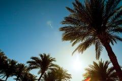 Aktueller Sonnenuntergang mit Palmen lizenzfreie stockfotos