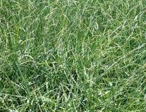 aktuellt gräs fotografering för bildbyråer