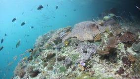 Aktuellt sopa över Coral Reef lager videofilmer