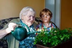Aktywna mała preschool dzieciaka chłopiec i uroczyste babci podlewania pietruszki rośliny z wodą możemy w domu Małe dziecko obrazy royalty free