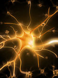 Aktywne nerw komórki Fotografia Stock