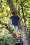 aktywnego chłopiec gałąź dziecka wspinaczkowa lasowa męska natura bawić się drzewnych potomstwa obrazy royalty free