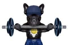 Aktywny sporta pies obrazy stock