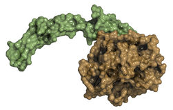 Aktywowany koagulacja czynnik VII, chemiczna struktura. (FVIIa) Zdjęcia Royalty Free