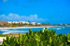 Akumal Caribbean beach in Riviera Maya Stock Image