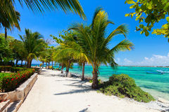 Akumal beach in Mexico Royalty Free Stock Image