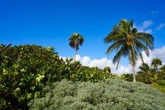 Akumal coconut palm tree beach Riviera Maya. Akumal coconut palm tree beach in Riviera Maya of Mayan Mexico royalty free stock photo