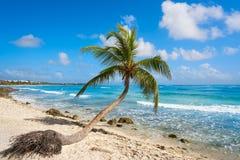 Akumal coconut palm tree beach Riviera Maya Stock Images