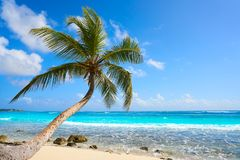 Akumal coconut palm tree beach Riviera Maya. Akumal coconut palm tree beach in Riviera Maya of Mayan Mexico royalty free stock images