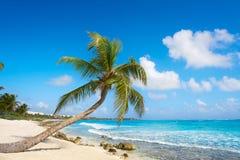 Akumal coconut palm tree beach Riviera Maya Royalty Free Stock Image