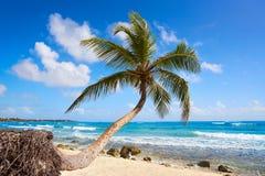 Akumal coconut palm tree beach Riviera Maya Royalty Free Stock Photography