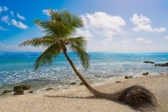 Akumal coconut palm tree beach Riviera Maya Royalty Free Stock Photos