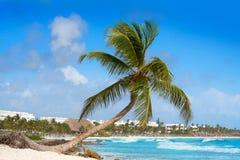 Akumal coconut palm tree beach Riviera Maya Stock Image