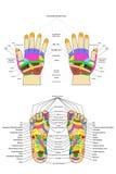 Akupunktur - Hand und Fuß, wenn der englische Text, auf Weiß lokalisiert ist stock abbildung