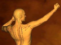 Akupunktura wzorcowy M-POSE M4ay-10-1, 3D model ilustracja wektor