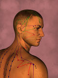 Akupunkturmodell, illustration 3D Arkivbild