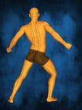 Akupunkturmodell M-POSE M4ay-06-12, modell 3D Fotografering för Bildbyråer