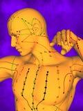 Akupunkturmodell M-POSE Ma-s-12-16, modell 3D Arkivbilder