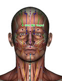 Akupunkturpunkt GB14 Yangbai Lizenzfreie Stockfotos