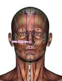 Akupunkturpunkt GV25 Suliao Stockbilder