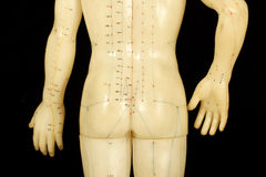 akupunkturpunkter Royaltyfri Bild