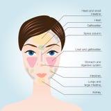 Akupunkturpunkter på framsida Royaltyfri Bild