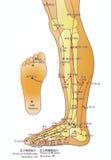 akupunktury alternatywna mapy medycyna royalty ilustracja