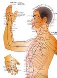akupunktury alternatywna mapy medycyna ilustracja wektor