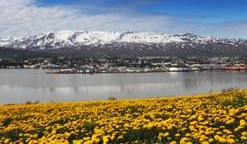 Akureyri stad - Island Royaltyfria Bilder