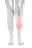 Akute Schmerz in einem Frauenschienbein lokalisiert auf weißem Hintergrund Beschneidungspfad auf weißem Hintergrund Stockfoto
