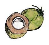 Akvarellillustration för två grön kokosnötter arkivfoto