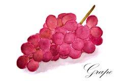 akvarellteckning av röda druvor Arkivfoton