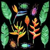 Akvarelluppsättning med tropiska beståndsdelar Arkivbilder
