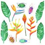 Akvarelluppsättning med tropiska beståndsdelar Royaltyfria Bilder