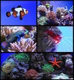 Akvariefisk royaltyfria bilder