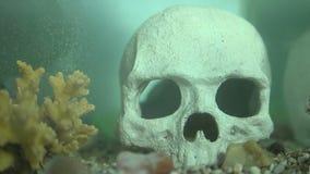 Akvariefisk i vatten lager videofilmer