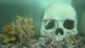 Akvariefisk i vatten stock video