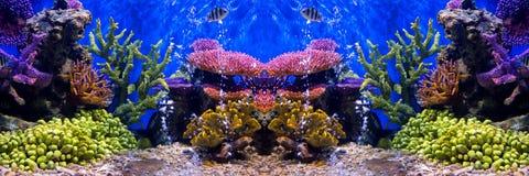 Akvariefisk med korall och vatten- djur royaltyfria foton